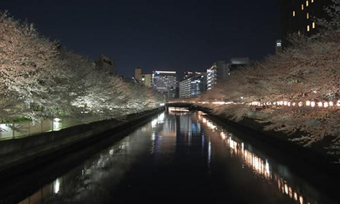 yozakura2